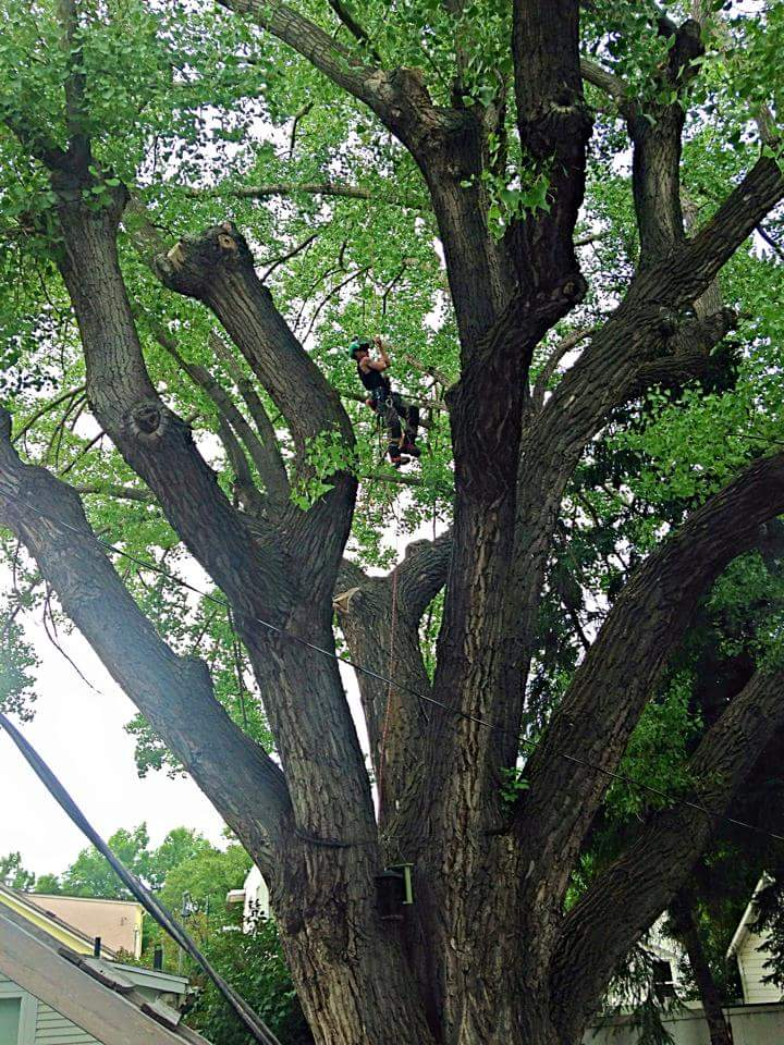 Tree Pruning by Second Nature Tree Care