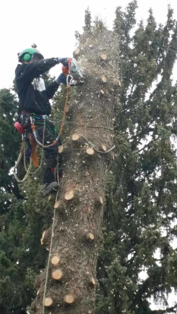 Tree Removal by Second Nature Tree Care