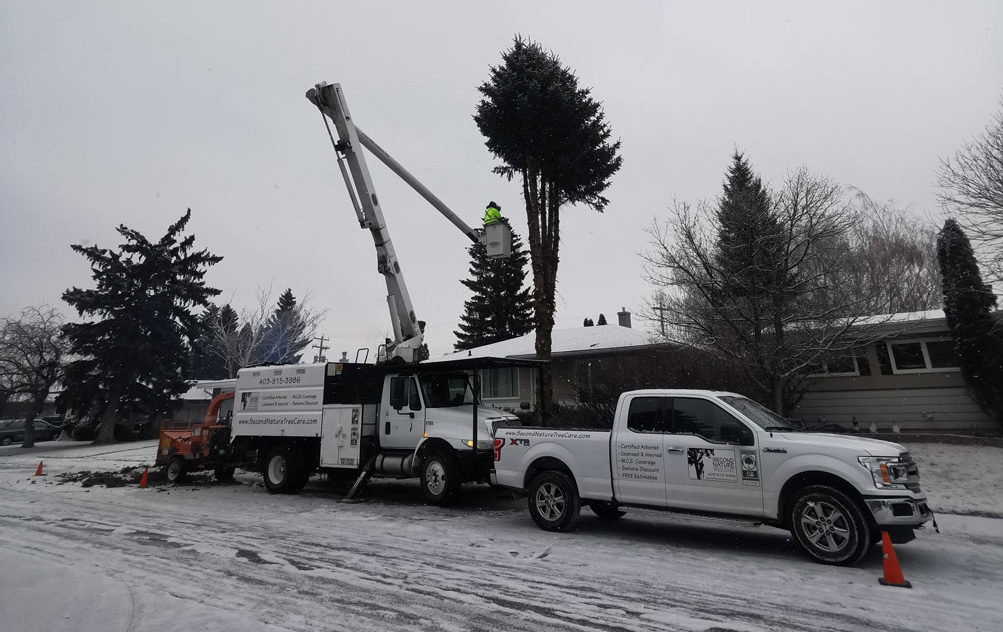 second nature tree care bucket truck providing lethbridge tree services
